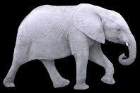 Elefante branco: significado e origem da expressão