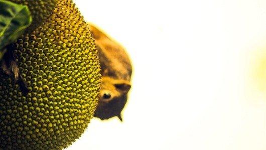 Fruta com J
