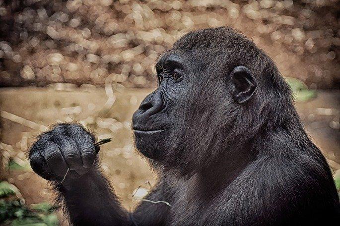 Macacos me mordam