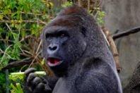 Macacos me mordam: significado da expressão