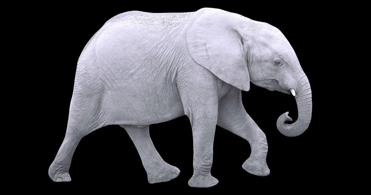 Elefante branco  significado e origem da expressão - Dúvidas de Português  no Dicio 5a4ef71733c39